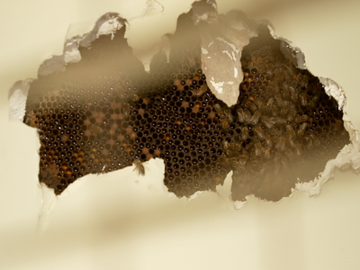 Stuff You Should Know – Episode 3: Minding the Hive
